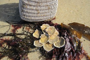 Picture: The Jersey Native Oyster, Ostrea edulis., by oyster pot
