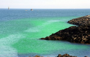 Water turned emerald green around La Collette, St Helier   PICTURE: TONY PIKE  26/07/2011 REF:01272331.jpg Environment  Harmless dye to monitor water outflow from power station