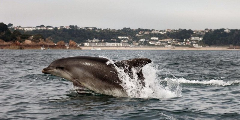 No 1 ~ Dolphin in St Brelade's Bay ~ John Ovenden - 681 points!