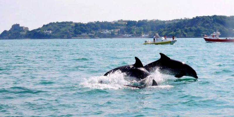 No 3 ~ Dolphins Playing ~ Chloe Fosse