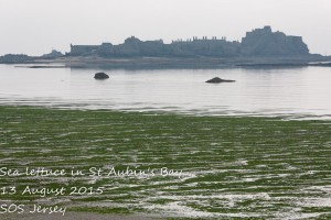 Sea lettuce problems in Jersey - SOS Jersey are backing a potential solution!
