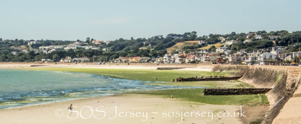 Sea lettuce problem in Jersey - SOS Jersey