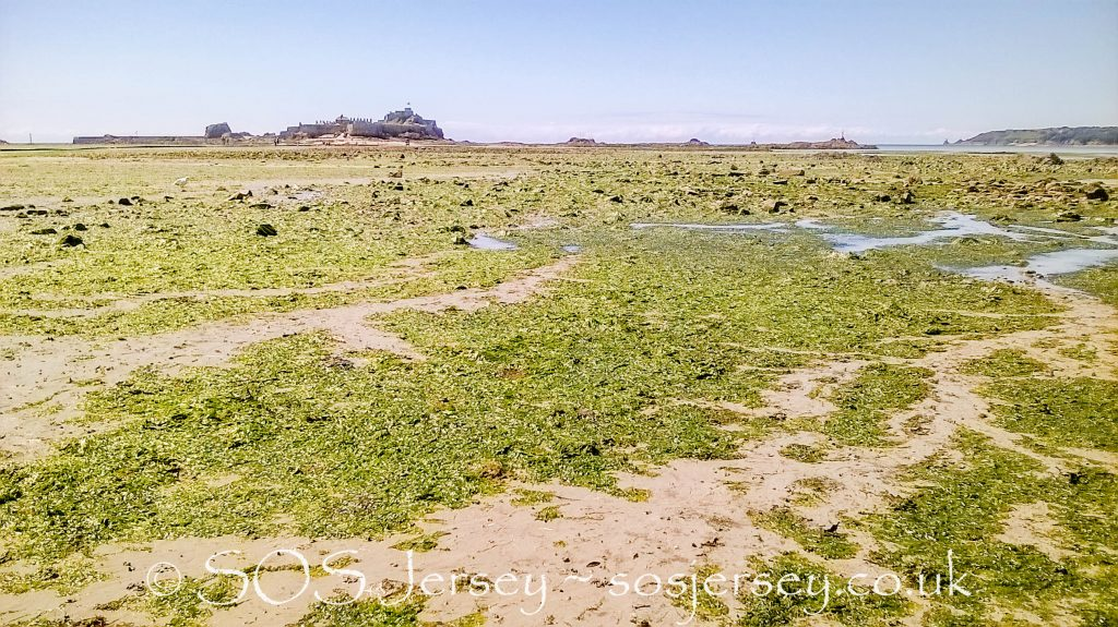 Sea Lettuce Problems in Jersey July 2016 - Jacqui Carrel Photography for Save Our Shoreline Jersey