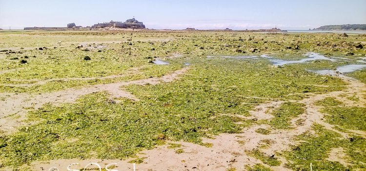 Sea lettuce talks – where we are up to and why