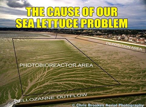 The cause of Jersey's sea lettuce problem