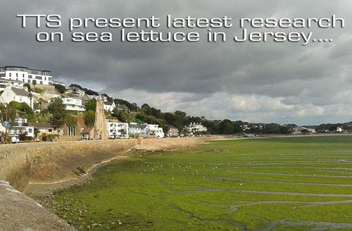 Sea Lettuce Problems in Jersey July 2014 - Save Our Shoreline Jersey