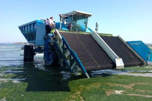 sea lettuce harvesting machine - picture courtesy of the Jersey Evening Post