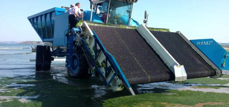 Why we believe the sea lettuce harvester won't work