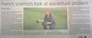 jacqui-carrel-of-sos-jersey-talks-about-sea-lettuce-in-jersey-and-upcoming-work-with-french-students-jep-article-27-october-2016