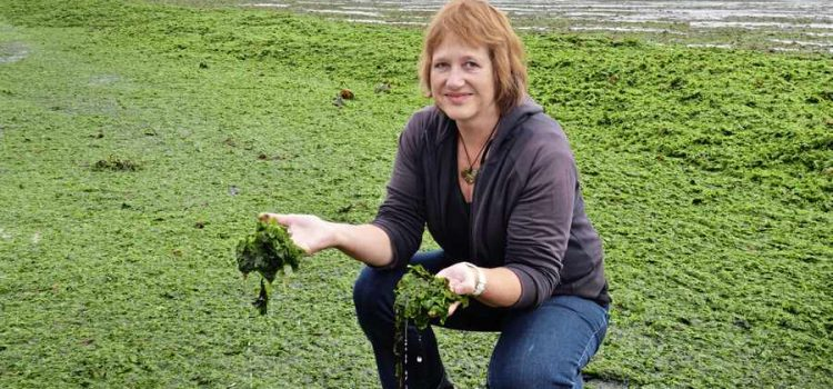 What we ACTUALLY said about the dangers of sea lettuce