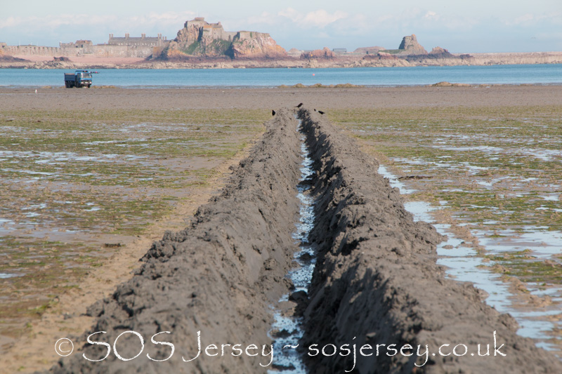 Sea lettuce trials in Jersey begin - 30th May 2017 - Jacqui Carrel Photography-11