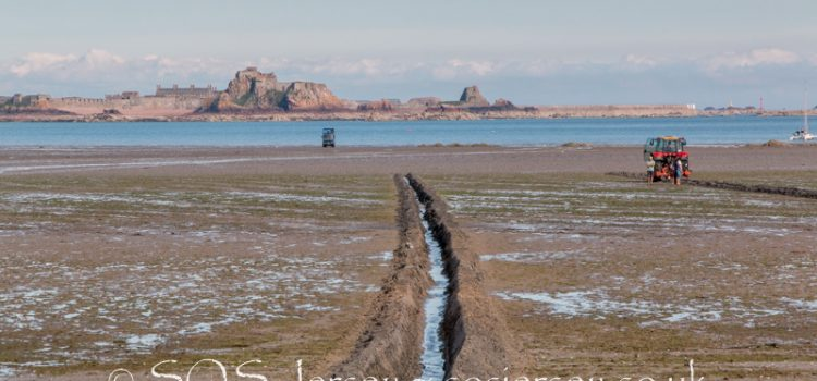 Sea lettuce furrowing trials finally commence