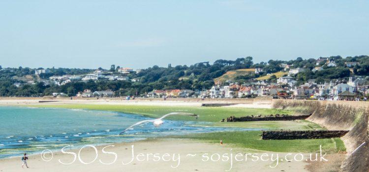 Sea lettuce in St Aubin's Bay, Jersey - SOS Jersey